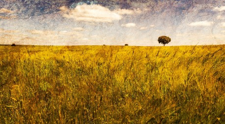 Fotografía panorámica de un campo en Valdesaz, Guadalajara nº01
