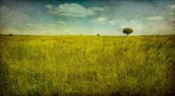 Fotografía panorámica de un campo en Valdesaz, Guadalajara nº02