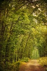 Fotografía vertical bosque en Río Frio de Riaza, Segovia nº01