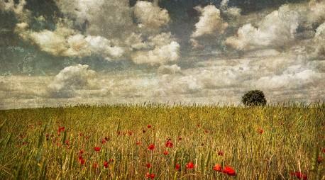 Fotografía panorámica de un campo de amapolas en Puebla de la Sierra, Segovía nº01