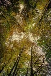 Cuadro vertical Selva de Irati, Navarra nº04