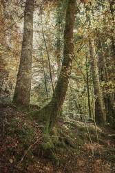 Cuadro vertical Selva de Irati, Navarra nº05