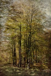 Cuadro vertical Selva de Irati, Navarra nº06