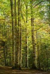 Cuadro vertical Selva de Irati, Navarra nº09