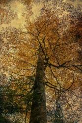 Cuadro vertical Selva de Irati, Navarra nº12