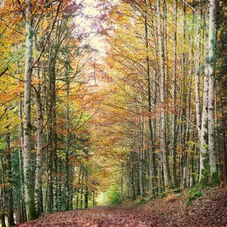 Cuadro vertical Selva de Irati, Navarra nº15