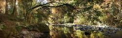Cuadro panorámico Selva de Irati, Navarra nº01