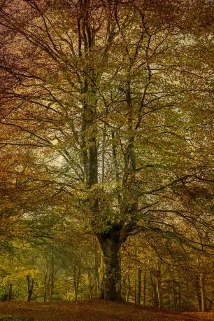 Cuadro vertical del Parque Natural de Urkiola, Vizcaya nº01