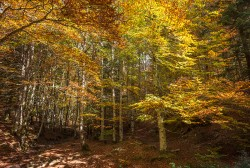 Cuadro horizontal Selva de Irati, Navarra nº03