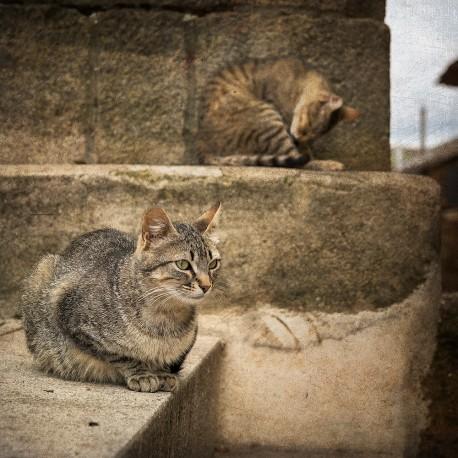 Cuadro de gatos en Puebla de Sanabria, Zamora nº01