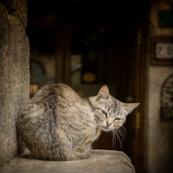 Cuadro de gatos en Puebla de Sanabria, Zamora nº02
