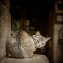 Cuadro de un gato en Puebla de Sanabria, Zamora nº02