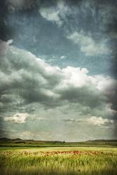 Fotografía vertical de un campo de amapolas en Osa de la Vega, Cuenca nº02
