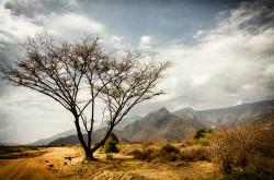 Fotografía horizontal de Kurungu, Kenia nº01