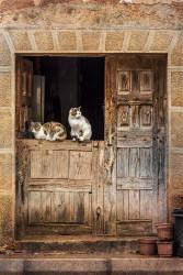 Fotografía vertical de unos gatos en Romanillos de Atienza, Guadalajara nº01