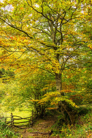 Fotografía vertical Somiedo, Asturias nº01