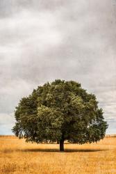 Fotografía vertical encina en Salamanca nº08