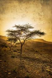 Fotografía vertical de acacias en Ait Saoun, Marruecos nº01