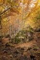 Cuadro vertical Somiedo, Asturias nº03