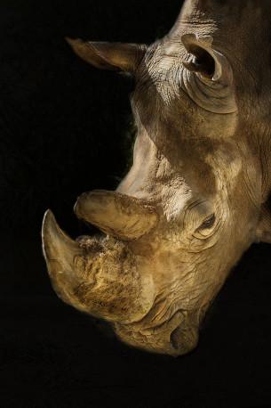 Fotografía vertical Zoológico (Rinoceronte blanco) de Madrid nº04